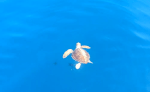 Turtle Power.