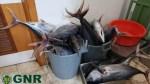 505 kg Tuna seized in Caniçal
