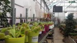 GNR SEIZED 34 CARNIVOROUS PLANTS IN MADEIRA