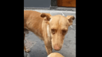 FUNCHAL CITY COUNCIL COLLECTS STRAY DOGS AT MONTE