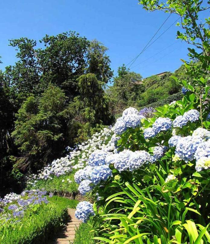 monte tuinen bloemen zomer