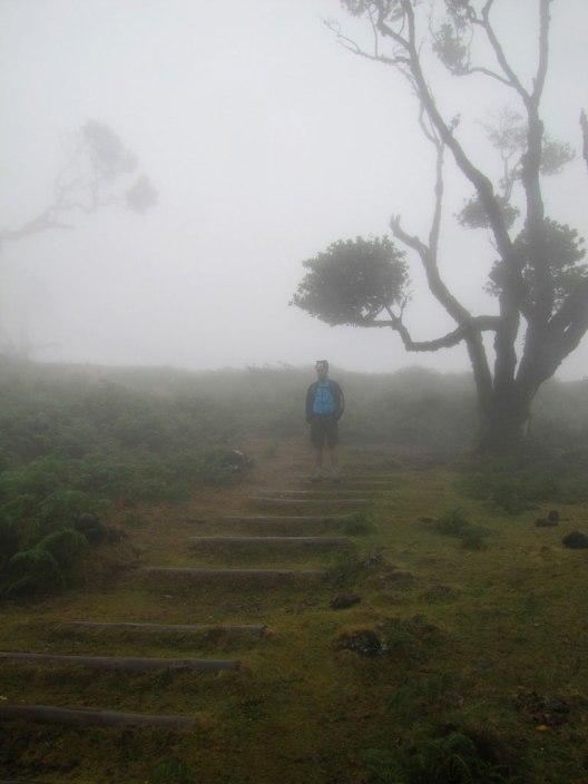 fanal walking trail descending steps
