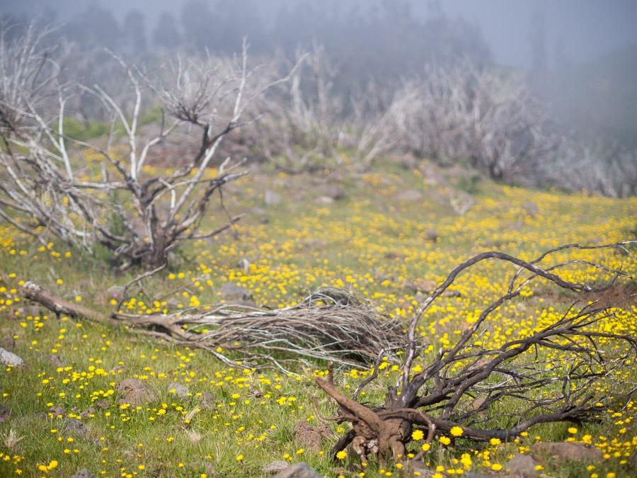 Madeira bloemeneiland