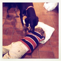 Dog investigation major melt-down in progress...