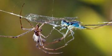 libellule et araignée