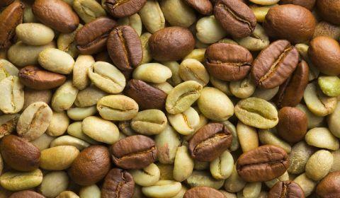 A closeup of ripe coffee beans