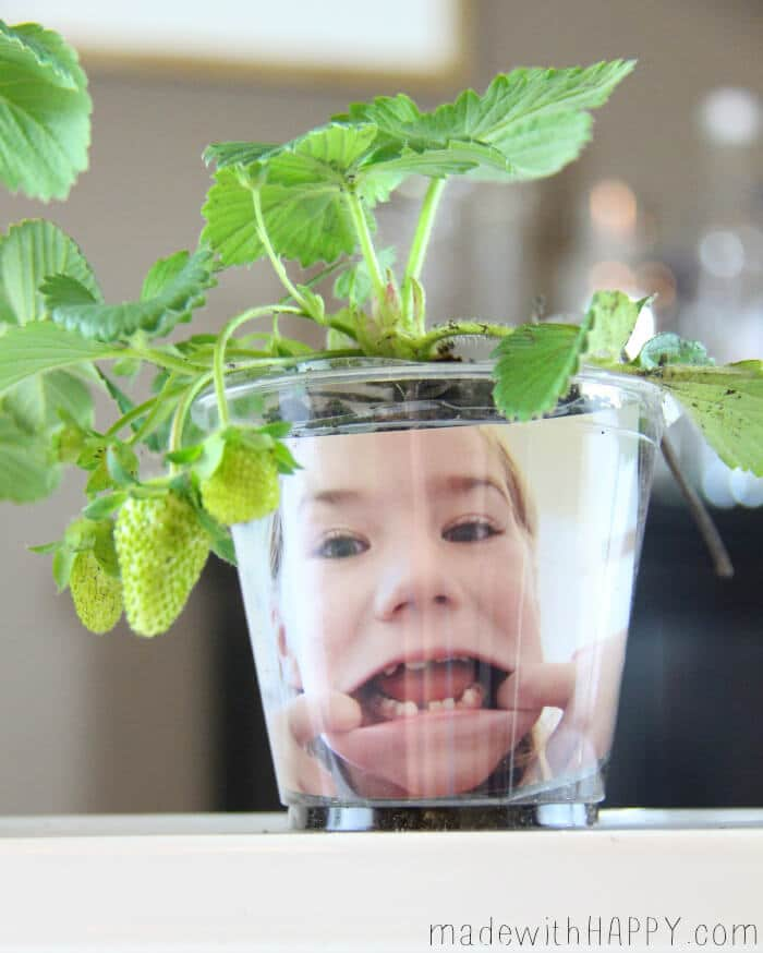 Kids Gardening | Kids Activities | fun with Gardening | Funny Face Printable Garden |www.madewithHAPPY.com