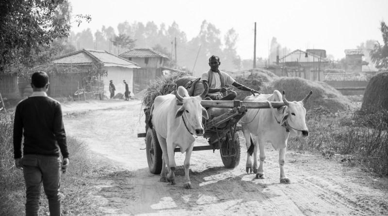 Life in Harsar Village of Dhanusa