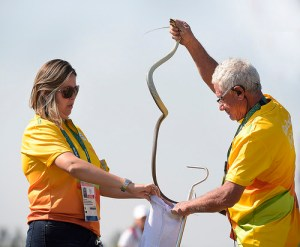 Golf in Rio includes resident snake catchers. [IGF]