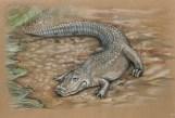 American Alligator web size