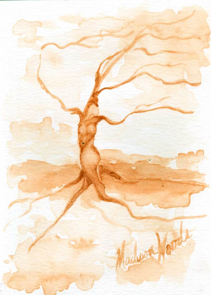 A Twisted Tree in sassafras root bark by Madison Woods.