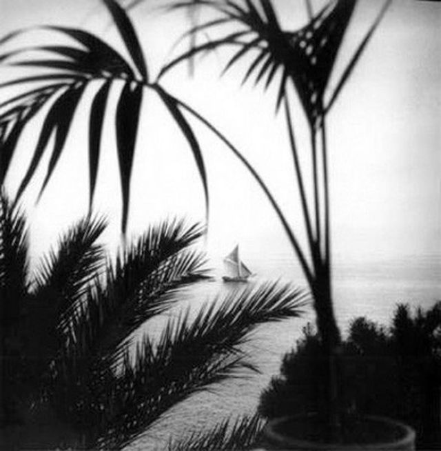 black and white palmtrees