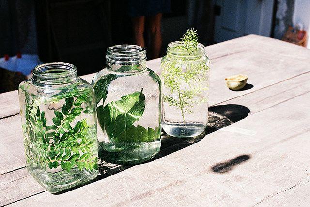 plants jars