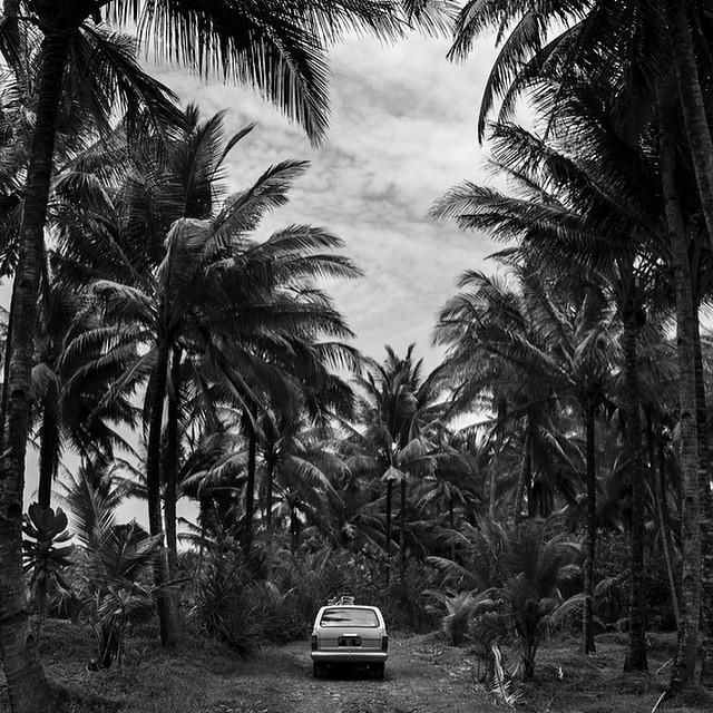 palmtrees car black & white
