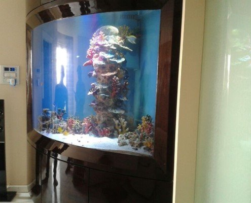 Aquariums work in India