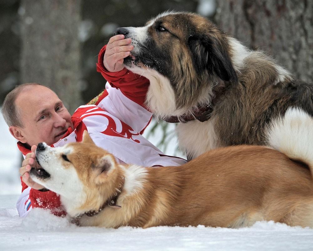 L'Akita, uno dei cani del presidente Putin