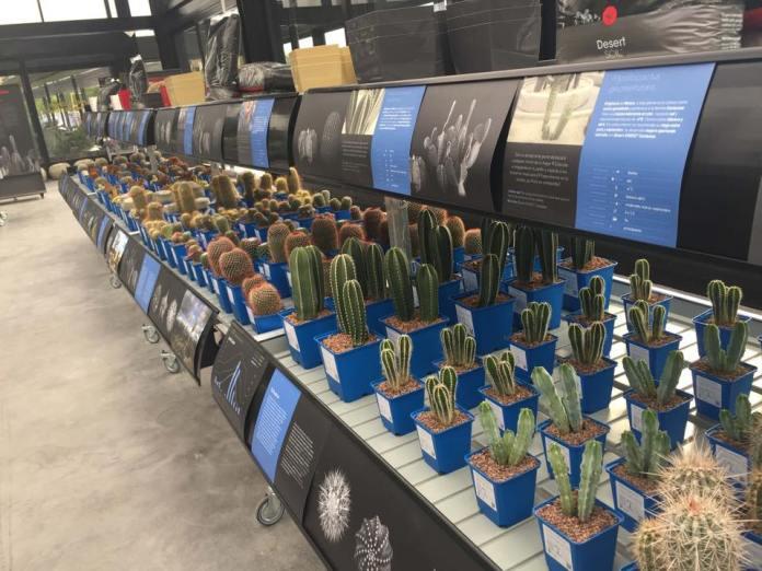 Locura por los cactus en Madrid: cuatro tiendas donde no pincharás 1