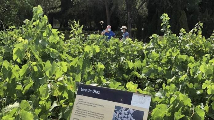 El Encín: la finca de Madrid que atesora 3.700 variedades de uva 1