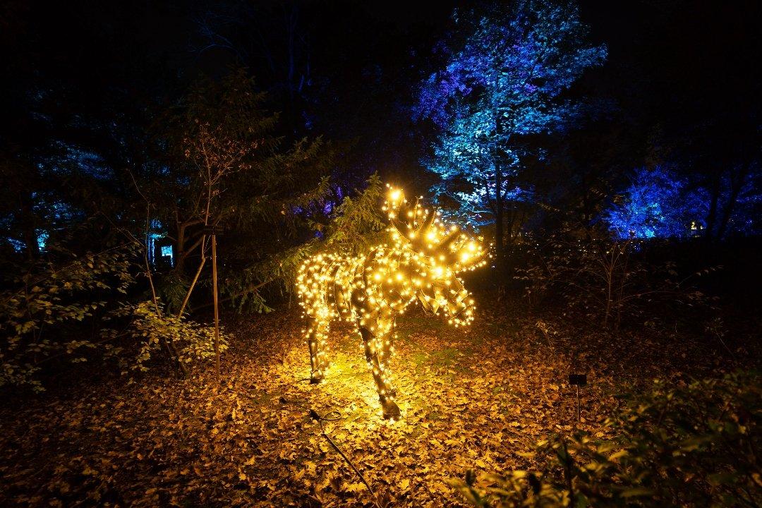 La luz navideña enciende el Jardín Botánico 4