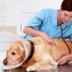 Cómo montar una clínica veterinaria