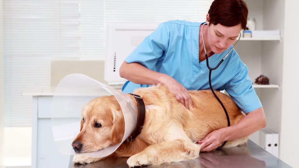 Licencia Actividad clínica veterinaria