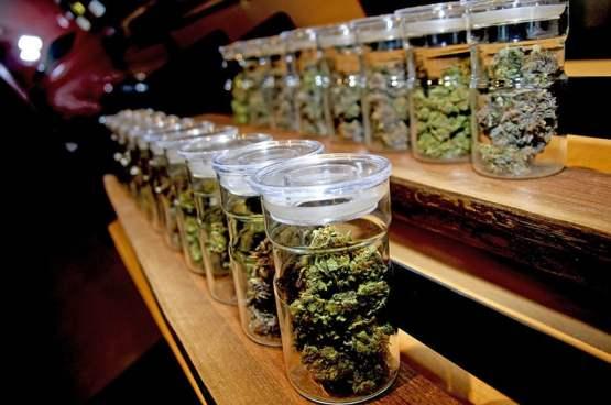 club cannabis 300x199