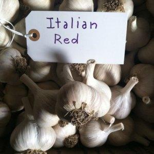 Italian Red Garlic