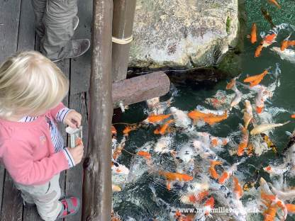 On nourrit les (gros) poissons