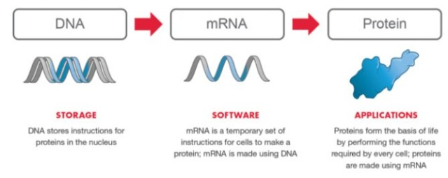 """2017: Moderna: mRNA jabs are """"rewriting the Genetic Code"""" we call it """"information therapy"""""""