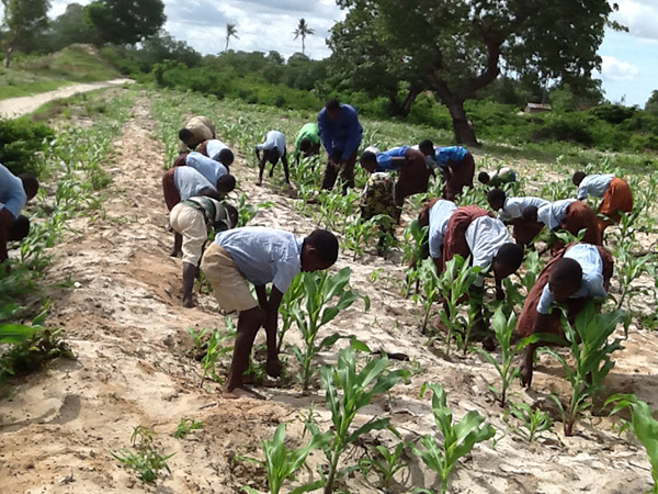 Fertilizing the corn.