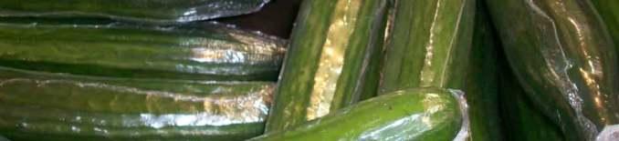 Eingeschweißte Gurken