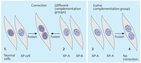 Genetic complementation in cell hybrids
