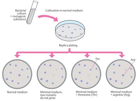 Mutant bacteria identified through an auxotrophic medium