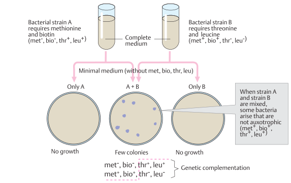 Genetic recombination in bacteria
