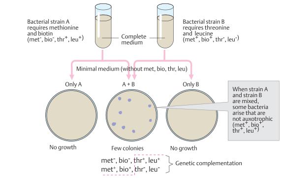 Genetic recombination in bacteria