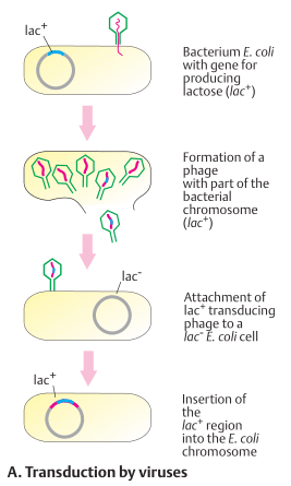 Transduction by viruses