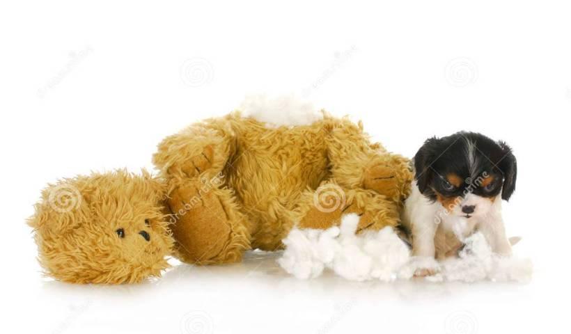destructive dog