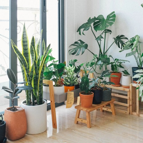 Best Indoor Plants – Good Inside Plants for Small Space