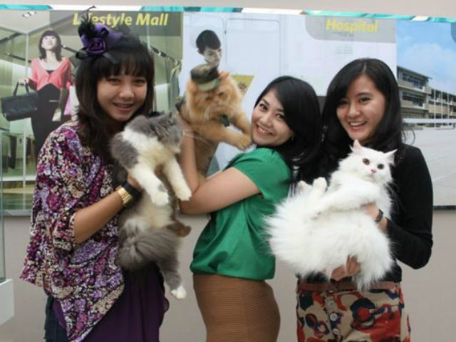 komunitas kucing magelang beloved cats