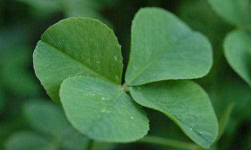 https://i2.wp.com/www.magforwomen.com/wp-content/uploads/2011/06/6-good-luck-symbols-to-drive-away-evil-four-leaf-clover.jpg