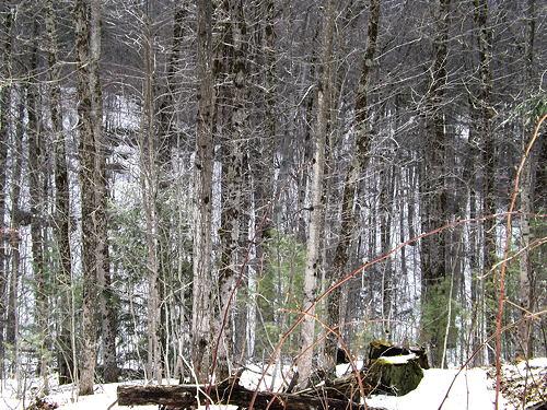 6 Forest Walk