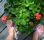 Two Feet and a Geranium