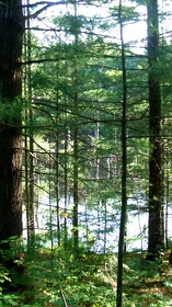 Wetland View: Our Backyard