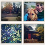{morning walks with Bauer}