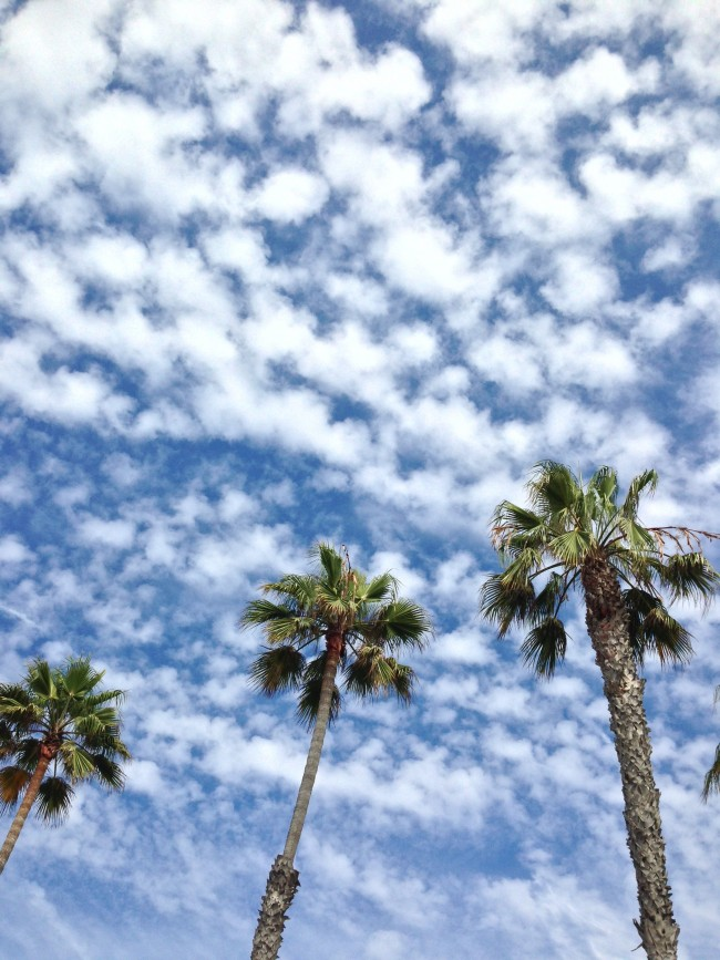 palm trees maggie whitley