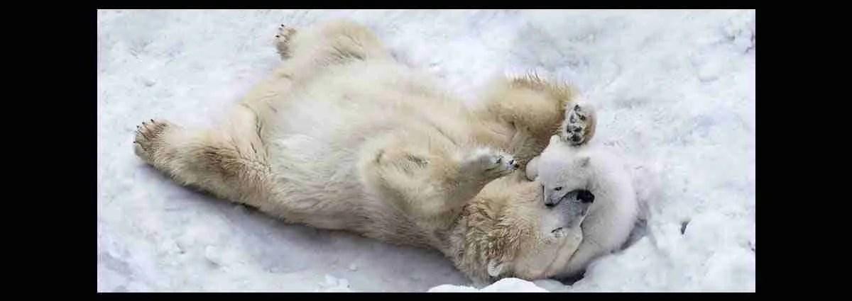 Amore di mamma orsa. Magica Escort