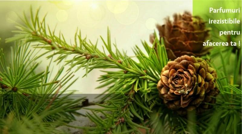"Parfumuri ""Wood & Nature"""