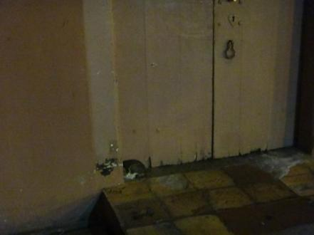 cat in a doorway Melaka