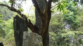 Hintang Archeological Park - Photo 2