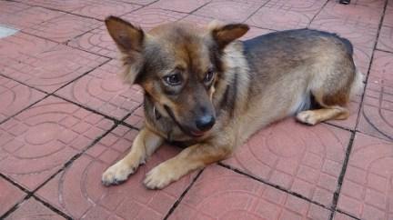 Beach Club Resort Sihanoukville - Munchkin The Friendly Watch Dog